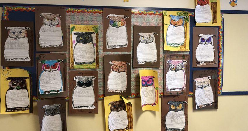 Owls in our Garry Oak