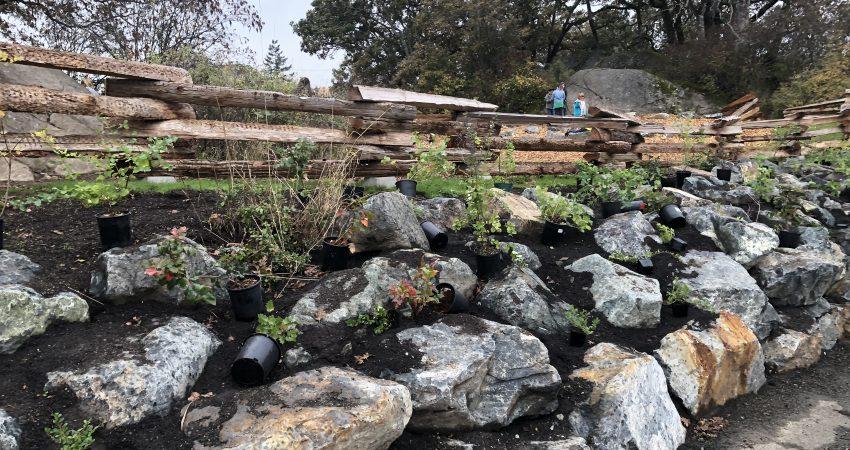 Planting at Marigold